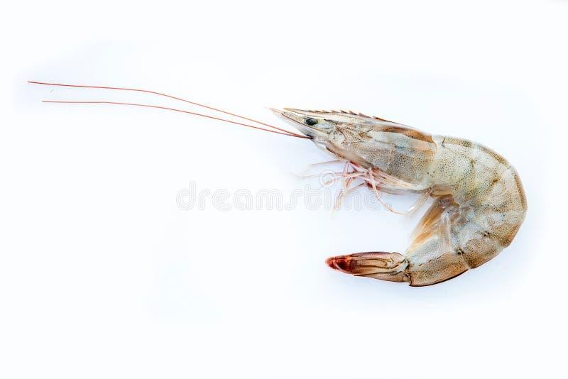 在白色背景的新鲜的vannamei虾大虾海鲜 图库摄影
