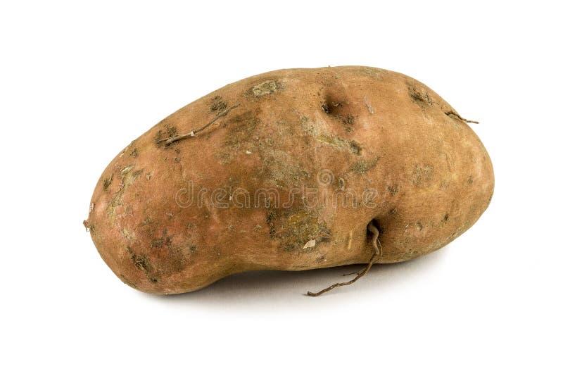 在白色背景的有机白薯 免版税库存照片