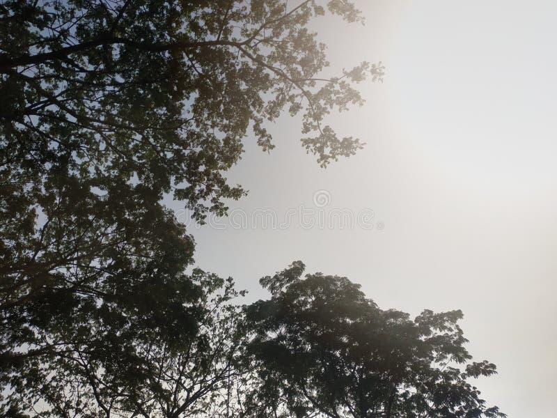 在白色背景的树叶子 免版税库存图片