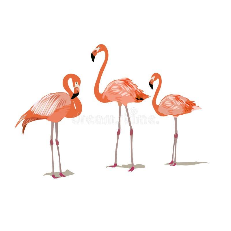 在白色背景的桃红色火鸟 库存例证