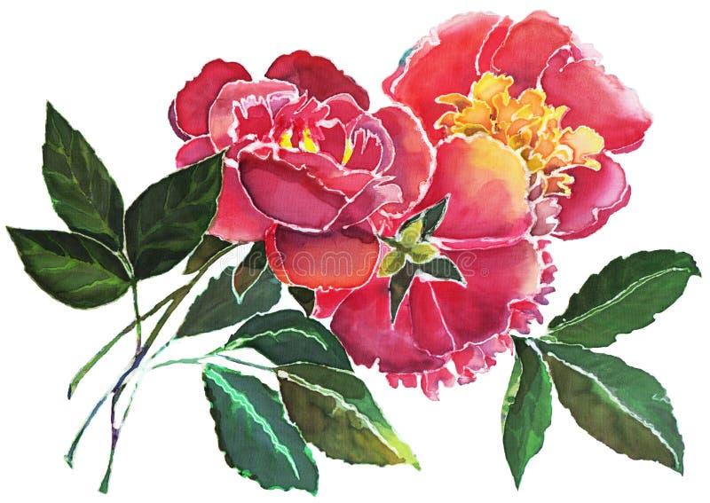 在白色背景的桃红色牡丹水彩花束 皇族释放例证