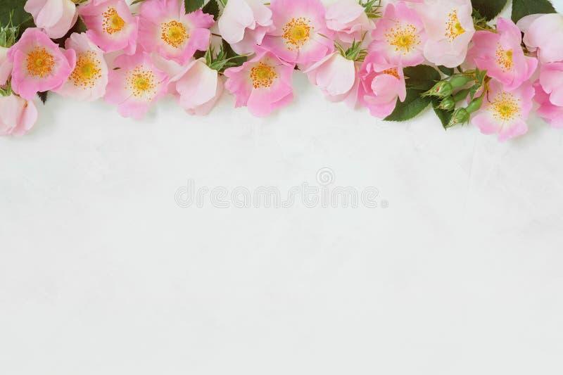 在白色背景的桃红色花卉桃红色花边界 免版税库存照片