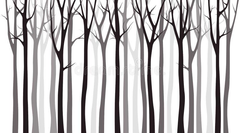 在白色背景的桦树木剪影 库存例证