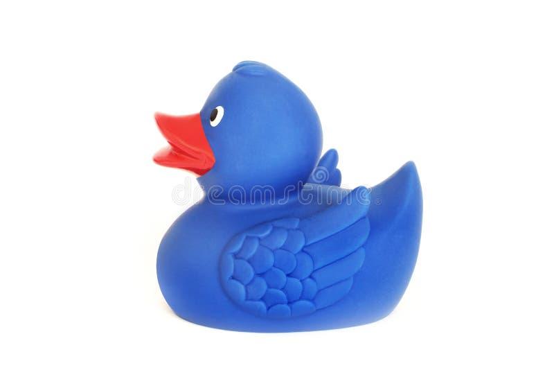 在白色背景的橡胶鸭子 一个玩具 蓝色鸭子 卫生间的玩具 库存图片