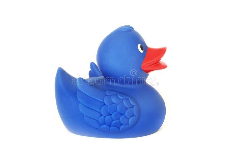 在白色背景的橡胶鸭子 一个玩具 蓝色鸭子 卫生间的玩具 图库摄影