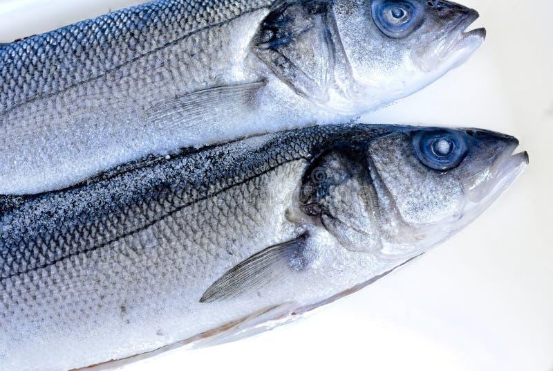 在白色背景的海水鱼 图库摄影