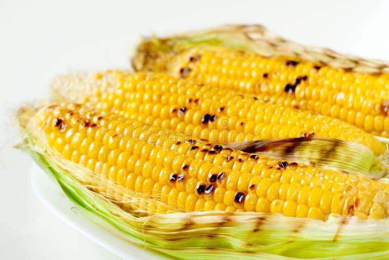 在白色背景的烤玉米棒子 图库摄影