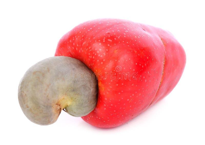 在白色背景的热带腰果果子 免版税库存图片