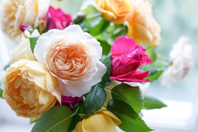 在白色背景的玫瑰   r 库存图片