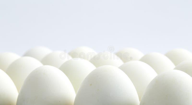 白白色家庭乱伦_在白色背景的白鸡蛋