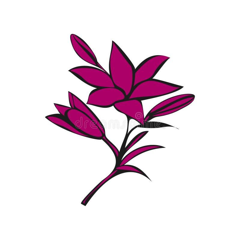 Download 在白色背景的百合 库存例证. 插画 包括有 投反对票, 图象, 花卉, 词根, 对象, 等高, 开花, 装饰 - 72359945