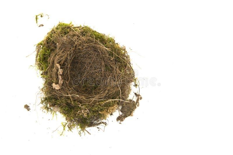 在白色背景的真正的空的知更鸟鸟巢 免版税库存图片