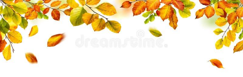 在白色背景的秋叶边界 免版税库存图片