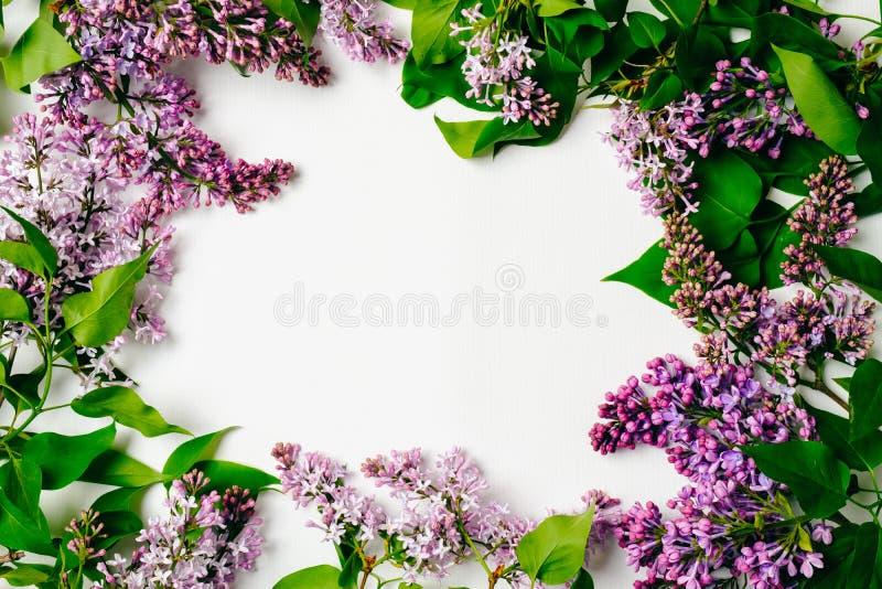 在白色背景的紫色淡紫色花框架 舱内甲板被放置的花卉构成,顶视图,在头顶上 春天背景,贺卡 免版税库存图片