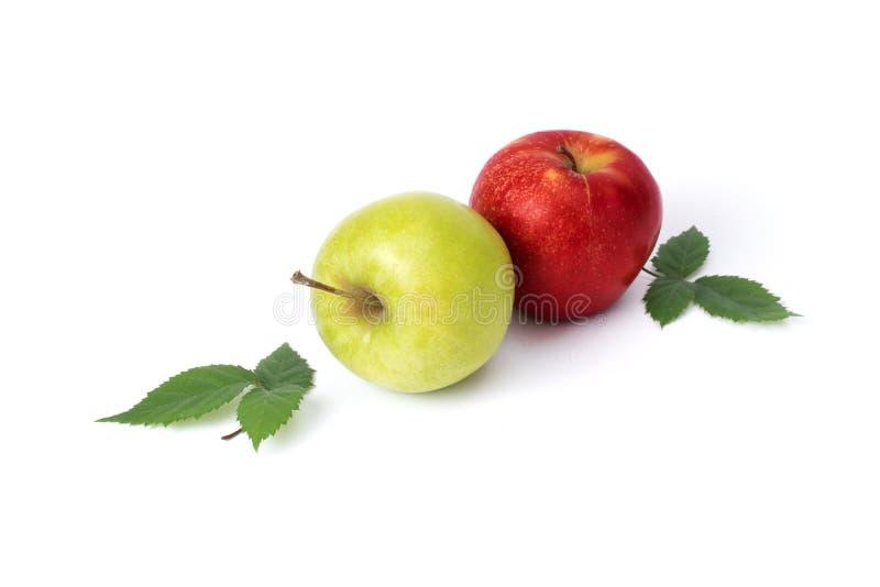 在白色背景的红色和绿色苹果 绿色和红色苹果水多在被隔绝的背景 一个小组与绿色的两个苹果 库存图片