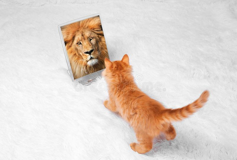 在白色背景的红色小猫演奏神色谎言 图库摄影