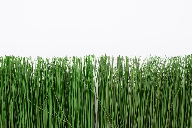 在白色背景的绿色人为草 在一个明亮的罐的稀薄的草 免版税库存照片
