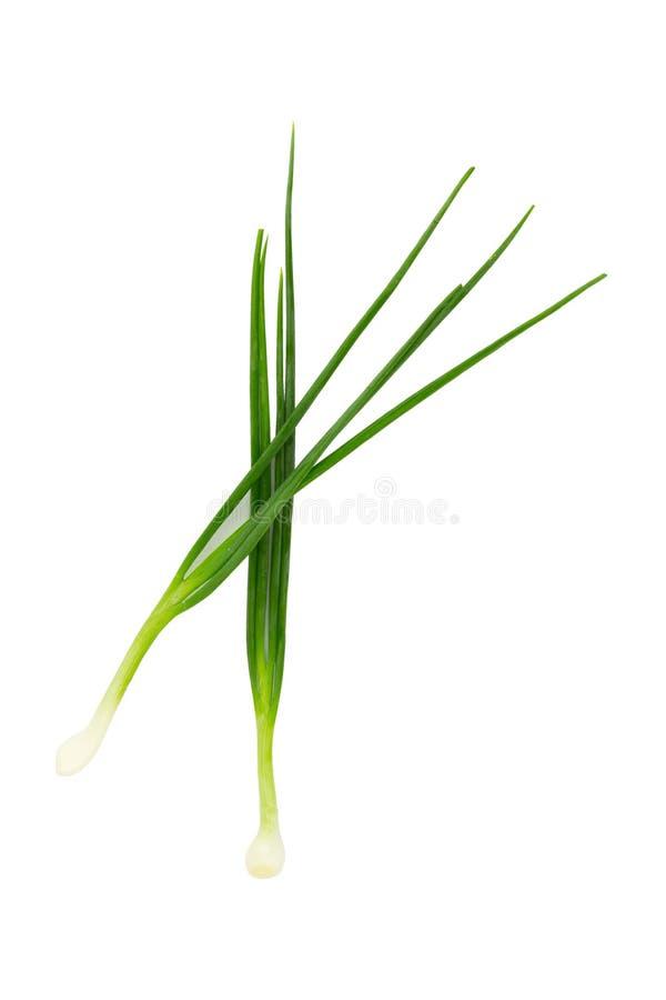 在白色背景的绿色春天葱 免版税图库摄影