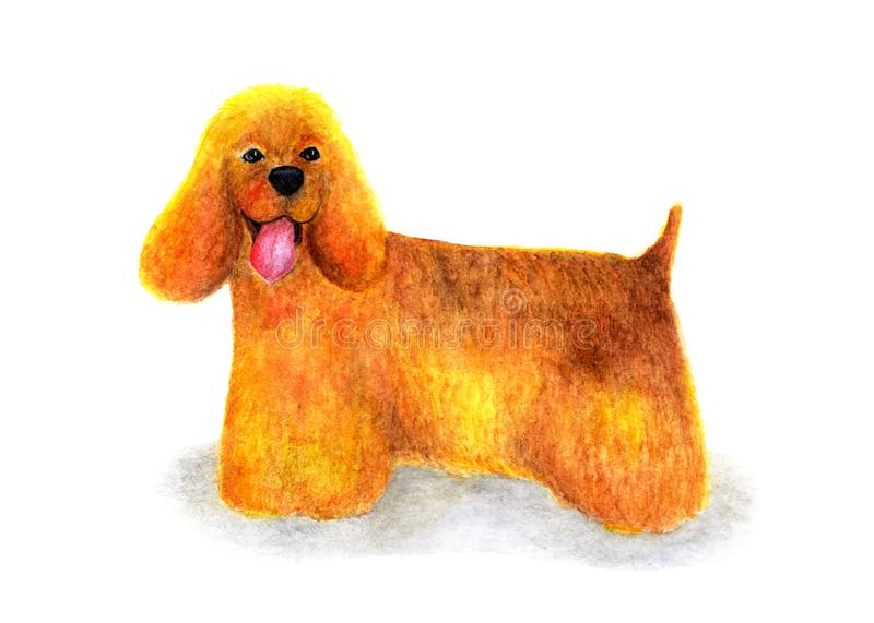 在白色背景的美国美卡犬 在水彩绘的画象 狗 皇族释放例证