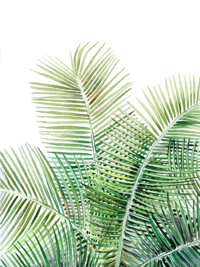 在白色背景的美好的棕榈树例证 皇族释放例证