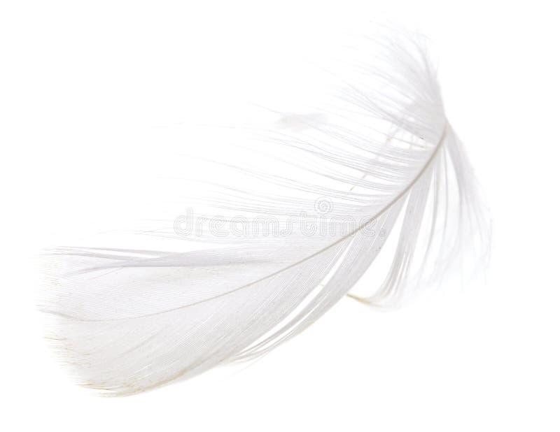 在白色背景的羽毛 免版税库存图片