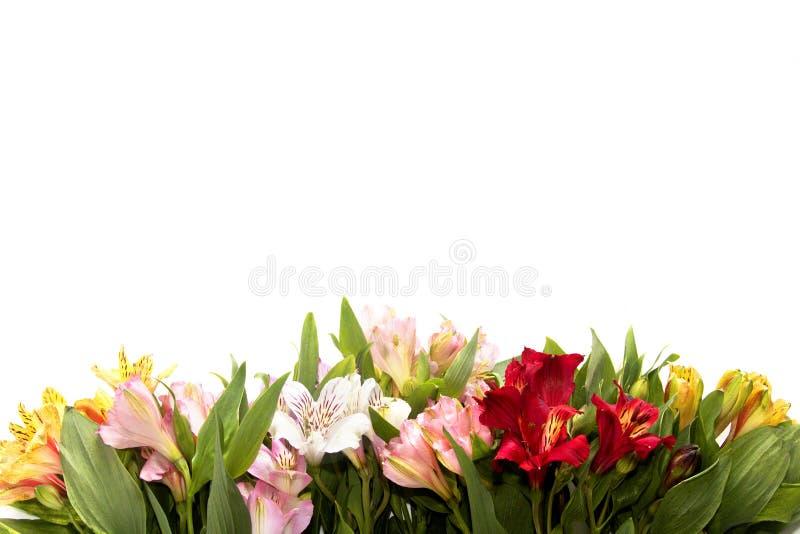 在白色背景的花构成与copyspace 免版税库存图片