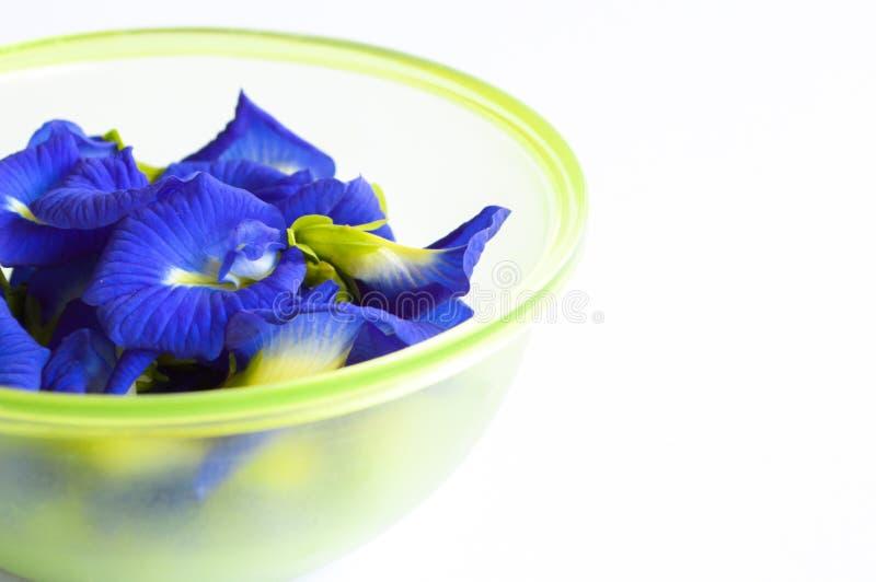 在白色背景的蓝色蝴蝶豌豆花 免版税库存照片