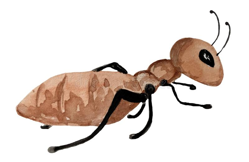 在白色背景的蚂蚁 皇族释放例证