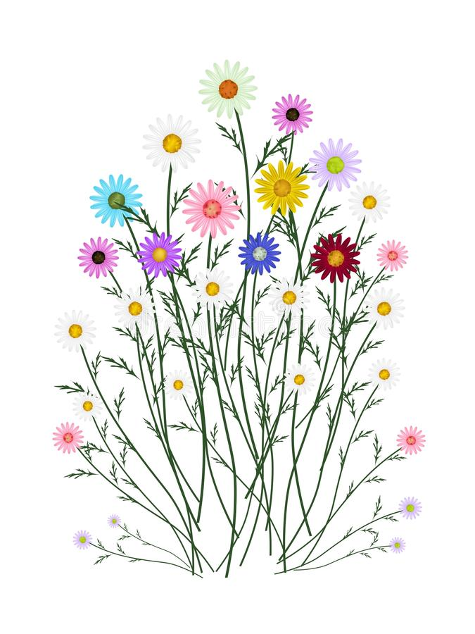 在白色背景的被分类的雏菊开花 皇族释放例证