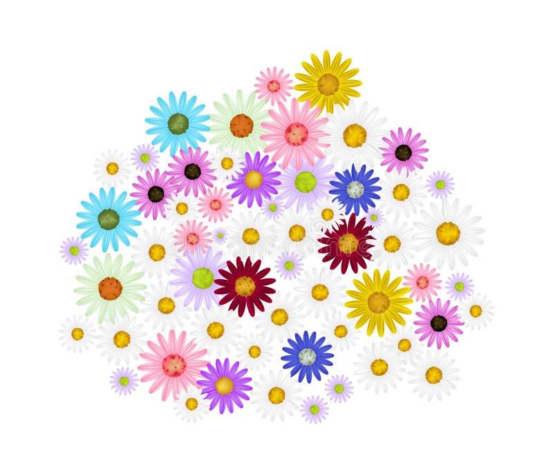 在白色背景的被分类的雏菊花 库存例证