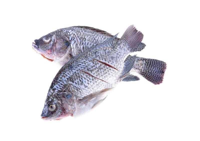 在白色背景的被毁坏的,被称的和被切的尼罗罗非鱼鱼 免版税图库摄影