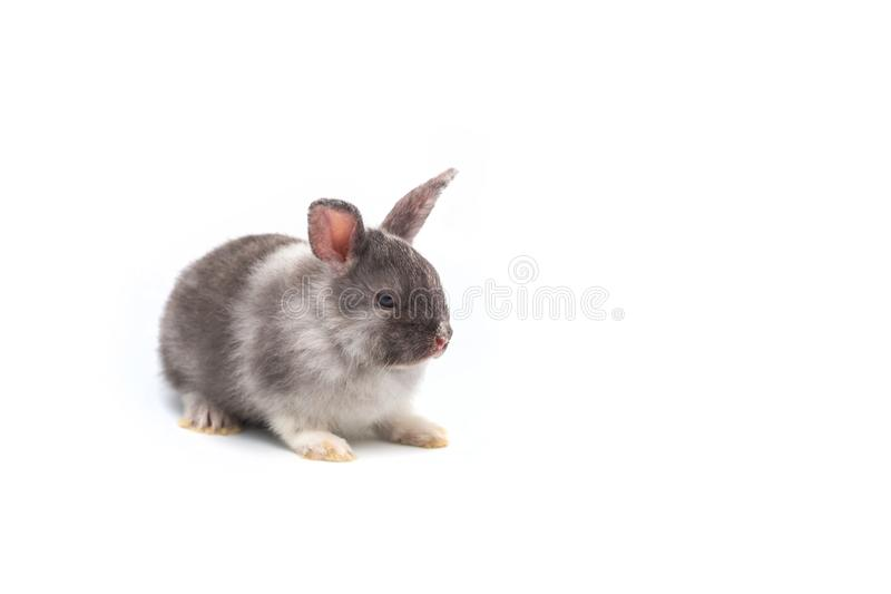 在白色背景的逗人喜爱的小兔子 免版税图库摄影