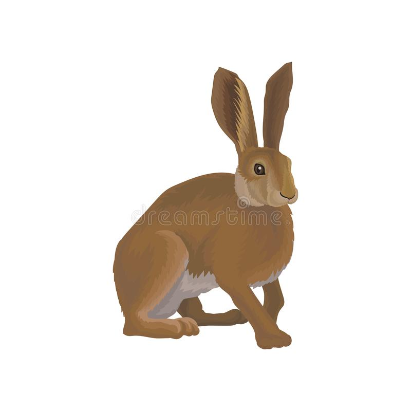 在白色背景的野兔狂放的北森林动物传染媒介例证 皇族释放例证