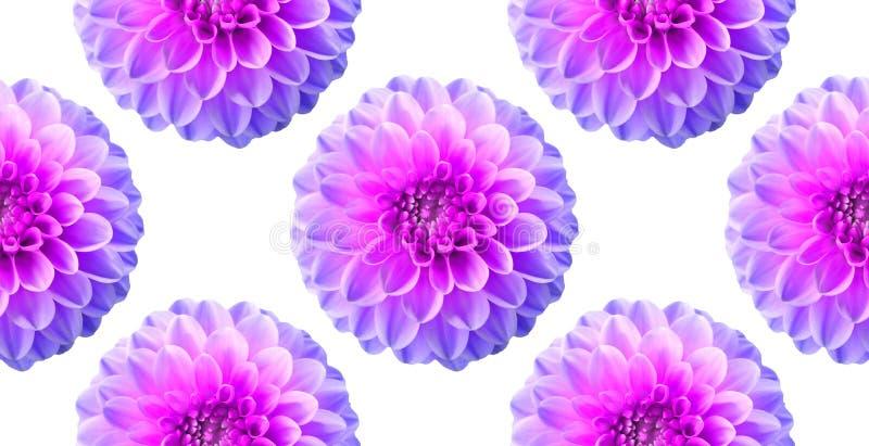 在白色背景的霓虹菊花 无缝的模式 拼贴画艺术性的例证 免版税库存图片
