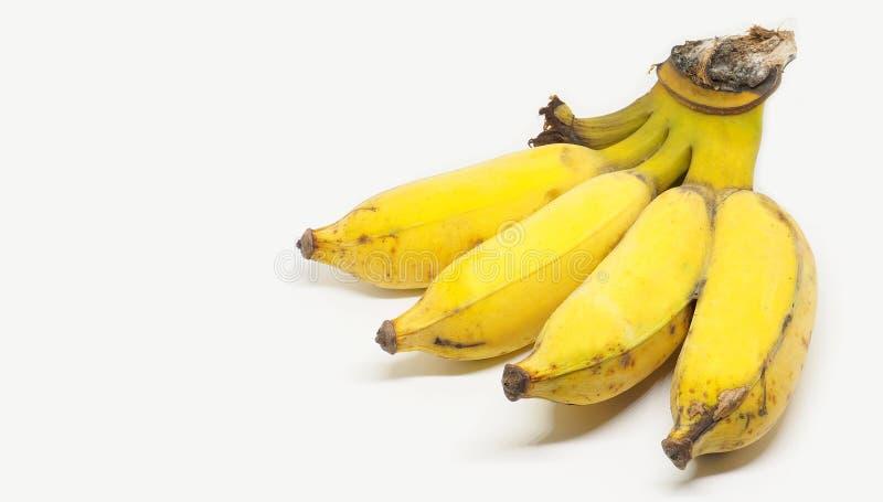 在白色背景的香蕉双果子孤立与拷贝空间ha 免版税图库摄影