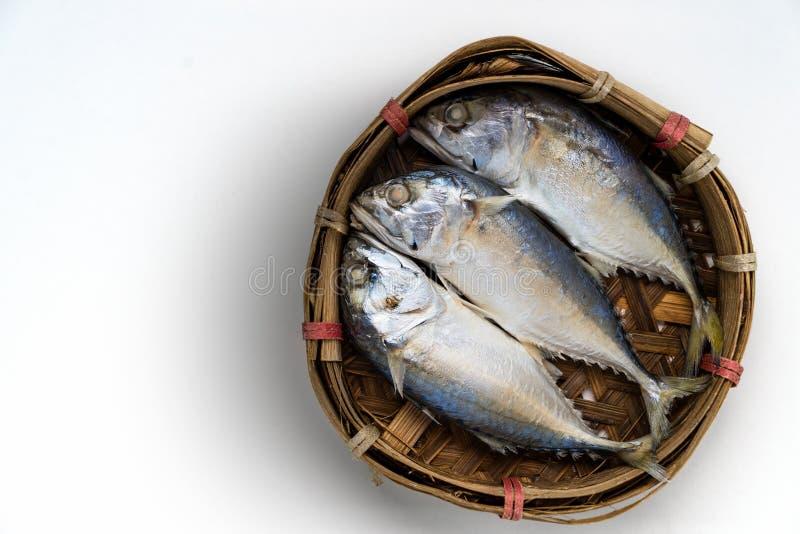 在白色背景的鲭鱼鱼 库存照片