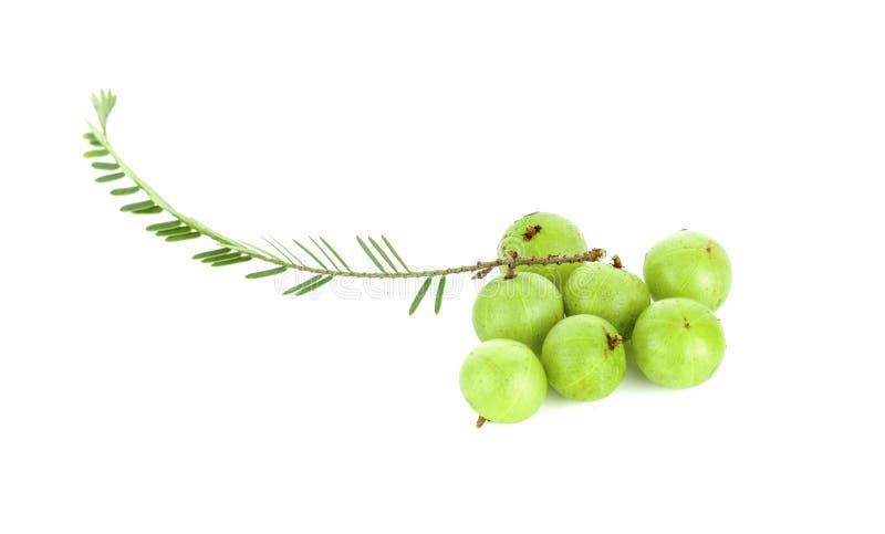 在白色背景的鹅莓印度鹅莓 免版税库存照片