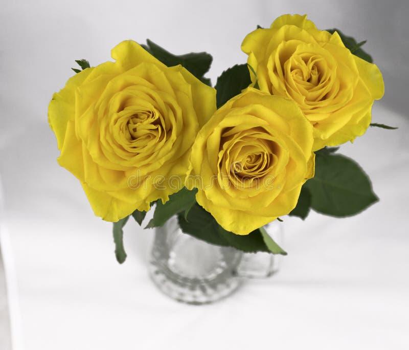 在白色背景的黄色玫瑰 免版税库存照片