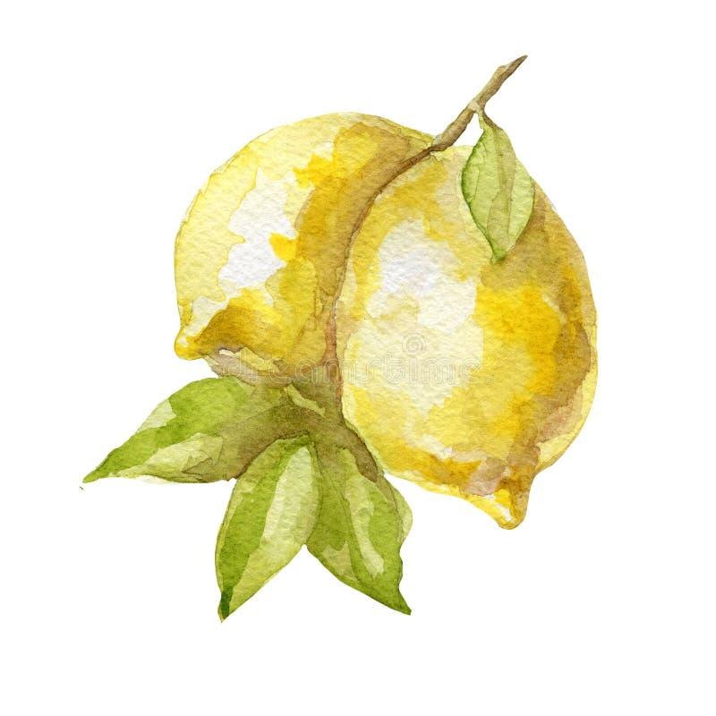 在白色背景的水彩手拉的柠檬果子 向量例证