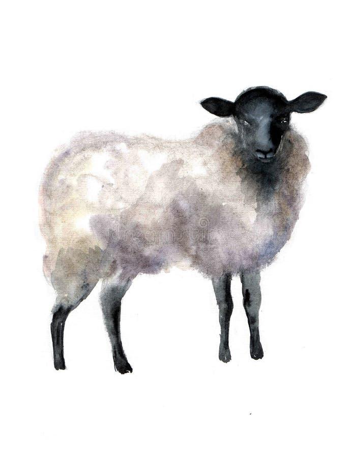 在白色背景的绵羊水彩 逗人喜爱的得出的仙境现有量例证 创造性的牲口 穆斯林的Commun背景 皇族释放例证