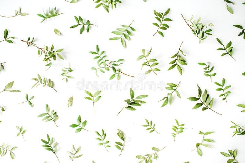 在白色背景的绿色分支 免版税库存照片
