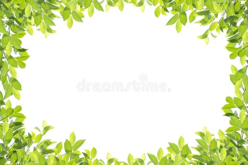 在白色背景的绿色叶子边界 免版税库存图片