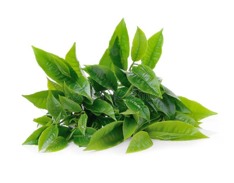 在白色背景的绿色茶叶 库存图片
