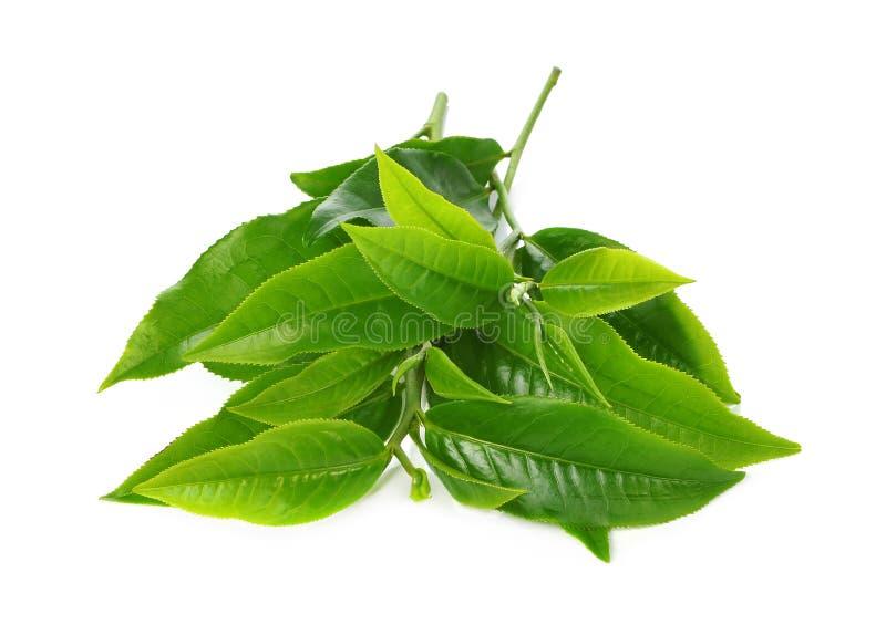 在白色背景的绿色茶叶 免版税库存照片