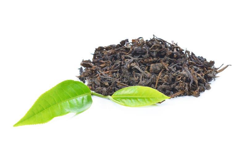 在白色背景的绿色茶叶 免版税库存图片
