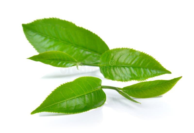 在白色背景的绿色茶叶 图库摄影