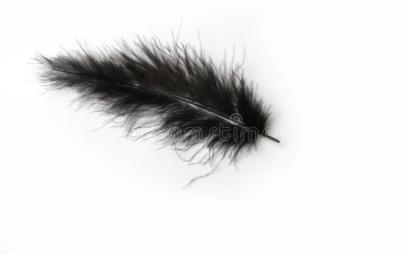 在白色背景的黑鹳羽毛 库存图片