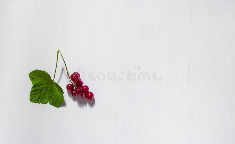 在白色背景红浆果分支和叶子莓果题字地方孤立拷贝空间 免版税库存图片