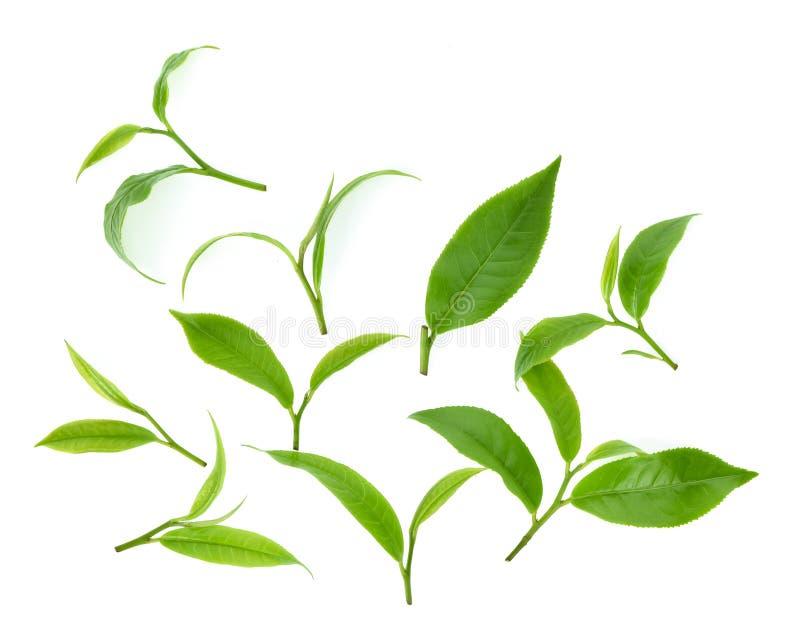在白色背景绿色茶叶隔绝的顶视图套 免版税库存图片