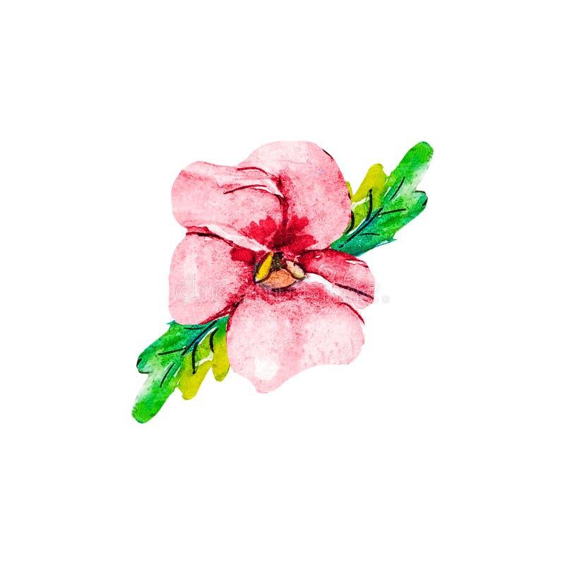在白色背景裁减路线隔绝的桃红色红色绯红色蝴蝶花花包括 春天三色庭院的中提琴 ?? 向量例证